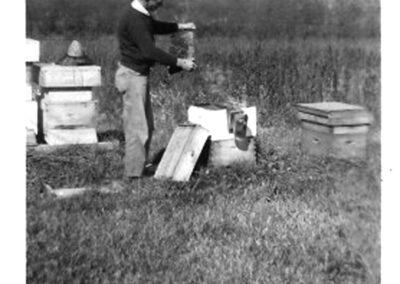 RogerJones Bees1930s